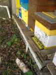 al jonge bijen ?