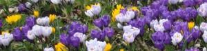 cropped-cropped-cropped-Voorjaarsboden1.jpg