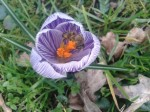 het voorjaar lonkt
