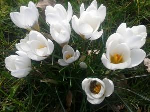 bijen halen stuifmeel