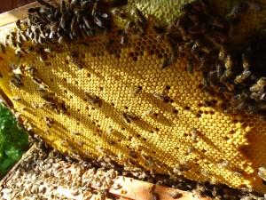 6 mei controle pleegvolk mooie dadantramen met broed en tweede honingkamer bezet