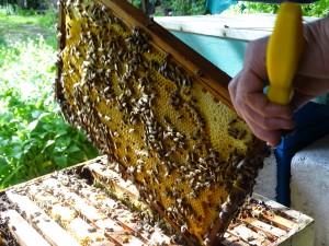 mooi stukje verzegelde honing voor voederkransonderzoek